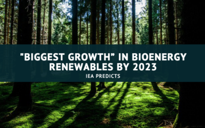 "IEA predicts ""biggest growth"" in bioenergy renewables by 2023"