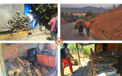 SBF Cluster performs life cycle analysis of the use of firewood in communities of Michoacán.