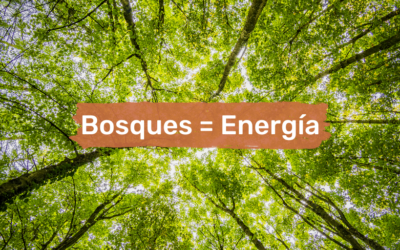 How forests help generate energy through biomass